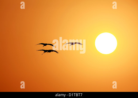 Sunset time - Stock Photo