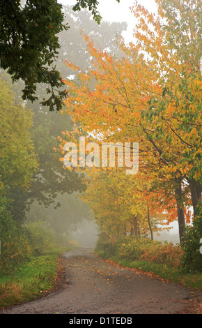 A view of a quiet English country lane on a misty morning in autumn.