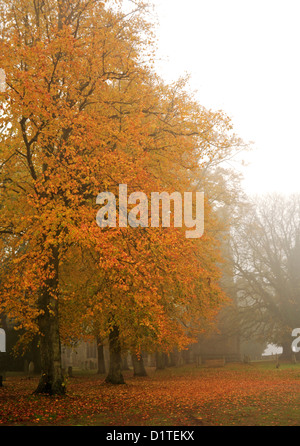 An autumn scene of beech trees with colourful leaves in an English country churchyard on a misty morning. - Stock Photo
