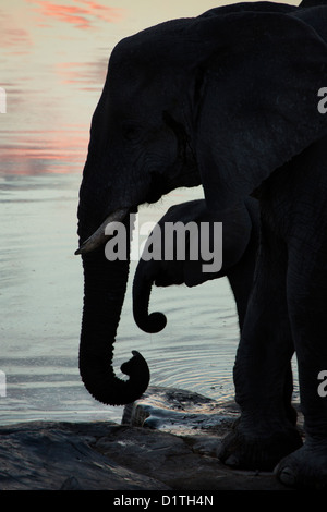 Mother and calf elephant silhouetted at waterhole in Namibia - Stock Photo