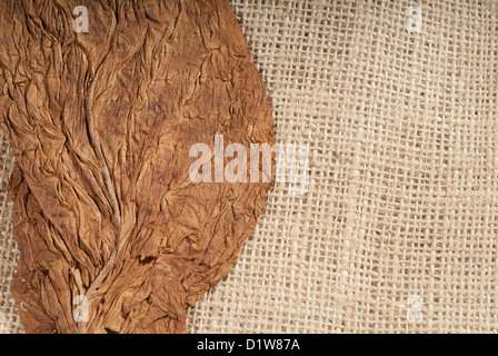 Head on shot of a pressed virginia tobacco leaf - Stock Photo