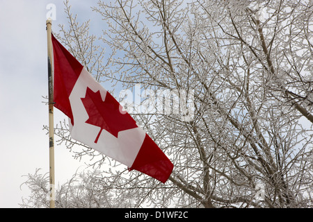 canadian flag flying with frost covered trees Forget Saskatchewan Canada - Stock Photo
