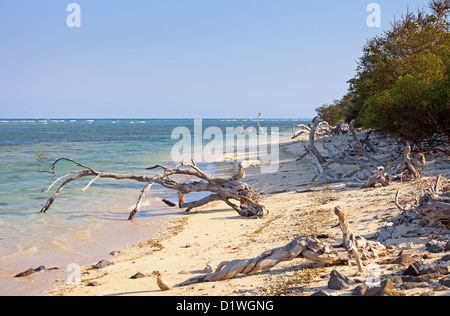 Wild tropical beach littered with driftwood. Indonesia, Gili island. - Stock Photo