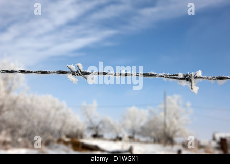 hoar frost on barbed wire fence on farmland in Forget Saskatchewan Canada - Stock Photo