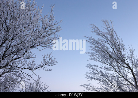 hoar frost on bare tree branches during evening winter Forget Saskatchewan Canada - Stock Photo