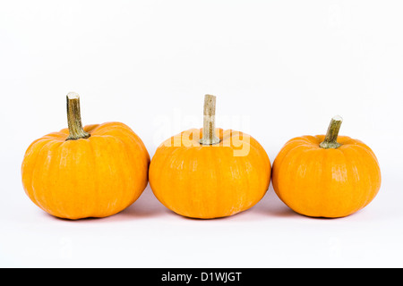 Cucurbita. Three mini pumpkins 'Jack be Little' against a white background. - Stock Photo