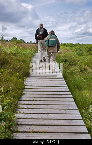 Walkers on wooden boardwalk in moorland at the High Fens / Hautes Fagnes nature reserve in the Belgian Ardennes, - Stock Photo