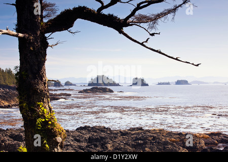 Broken Islands viewed from the Wild Pacific Trail on Vancouver Island, Ucluelet, British Columbia, Canada. - Stock Photo
