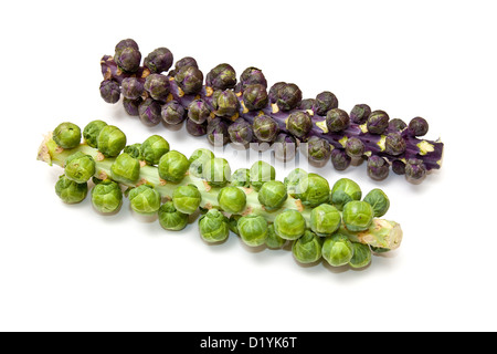 Brussel sprouts on the stem or stalk.isolated on a white studio background. - Stock Photo
