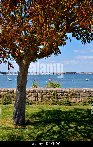 Tree with red leaves in the port of Port-Louis, with the town of Lorient in the background, commune in the Morbihan - Stock Photo