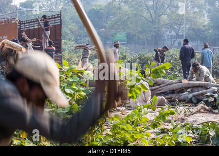 Cutting down trees and gathering wood near Delhi, India - Stock Photo