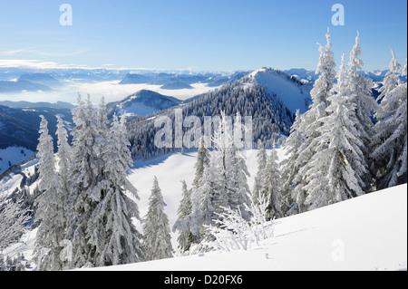 Snow-covered fir trees with view down to the Inn valley, Hochries, Chiemgau range, Chiemgau, Upper Bavaria, Bavaria, - Stock Photo