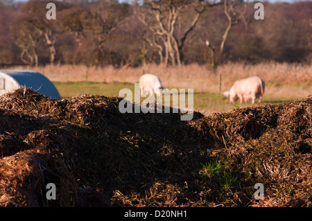 Pile of manure on pig farm - Stock Photo