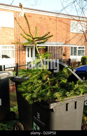 Christmas Tree Placed In Wheelie Bin. - Stock Photo