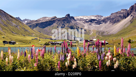 Panoramic photo of Tignes le Lac with lupine flowers in the foreground. Tignes is a commune in the Tarentaise Valley, - Stock Photo