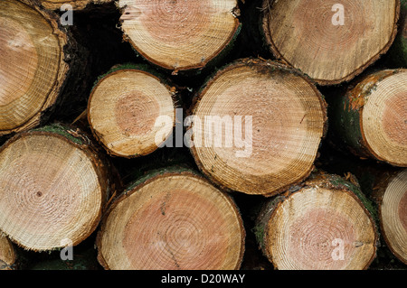 The ends of Logs in a stack - Stock Photo