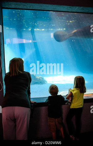 Young children with their Grandma watch Manatee and turtles swim at the Sarasota MOTE Aquarium Florida - Stock Photo