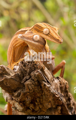 Lined leaf-tail gecko, Uroplatus lineatus on a trunk - Stock Photo
