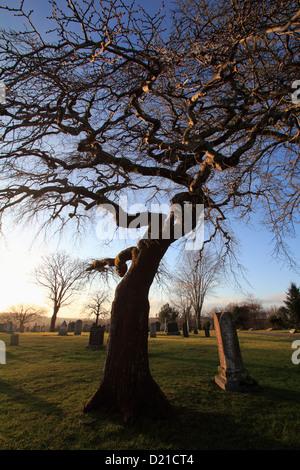 A scary tree in a haunted cemetery in Lunenburg Nova Scotia Canada - Stock Photo