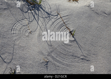Structures in the sand of the dunes, Hiddensee Island, Western Pomerania Lagoon Area National Park, Mecklenburg - Stock Photo