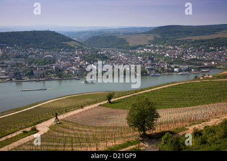 View across vineyards, Rhine river and Bingen from Niederwalddenkmal monument, Rudesheim am Rhein, Hesse, Germany, - Stock Photo