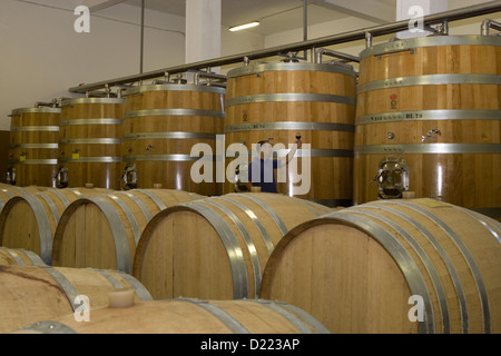 Sardinia: Dorgali - Cannonau Cantina / fermenting barrels in main cantina. Tasting the wine - Stock Photo
