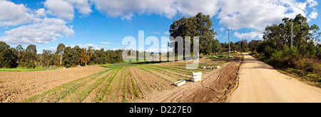 TOWAMBA, Australia - Panorama of a farm in Towamba in rural New South Wales, Australia, with a dirt road running - Stock Photo