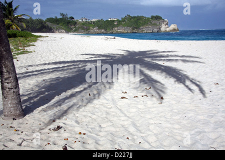 the shadow of a palm tree on the sandy beach of Foul Bay in Barbados - Stock Photo