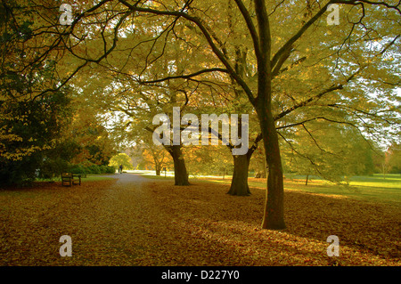 Autumn trees and leaves in Kew Gardens. - Stock Photo