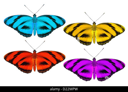 Set of tropic butterfly isolated on white - Stock Photo
