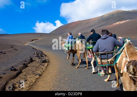 Camel Safari, Timanfaya National Park, Lanzarote, Canary Islands, Spain - Stock Photo