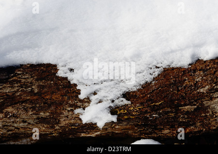Forest ground cover in winter wetlands. - Stock Photo