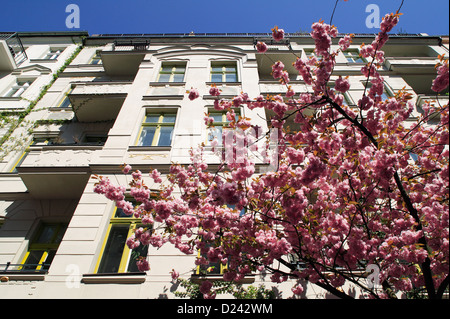 Berlin, Germany, blue budding cherry tree in front of an old building - Stock Photo