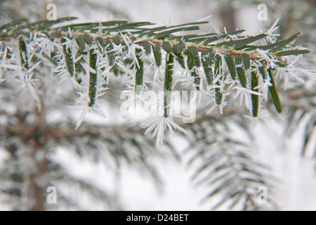 Detail of spray of yew in the icing - Stock Photo