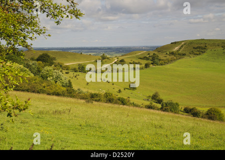 View of downland and footpath, Ridgeway Path, Ivinghoe Beacon, Chiltern Hills, Buckinghamshire, England, June - Stock Photo