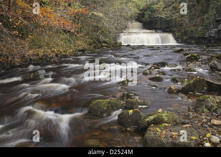View waterfall limestone rocks autumn leaves Cotter Force Cotterdale Beck Wensleydale Yorkshire Dales N.P North - Stock Photo