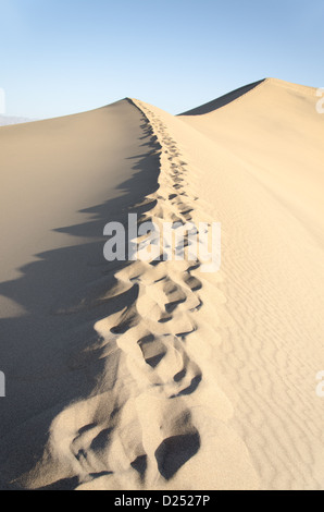 desert sand dune with trail of footsteps - Stock Photo