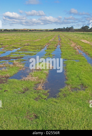 View across newly created 'Higher Level Stewardship' scheme land on former arable field with flooding due to deliberate - Stock Photo