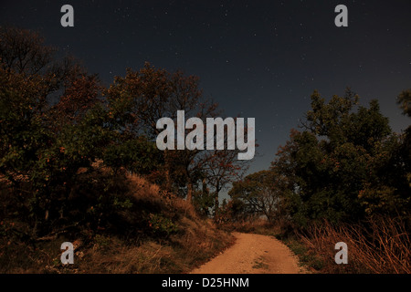 Night landscape, lonely tree in the night sky with moving stars - Stock Photo