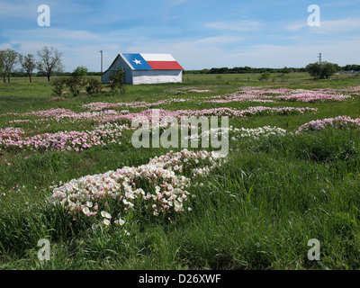 Texas Wildflowers: Bluebonnets and Pink Evening Primrose (aka Buttercups) in the Spring and Lone Star painted on - Stock Photo