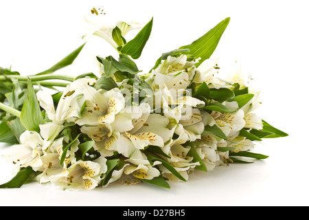 beautiful bouquet of white alstroemeria on a white background - Stock Photo