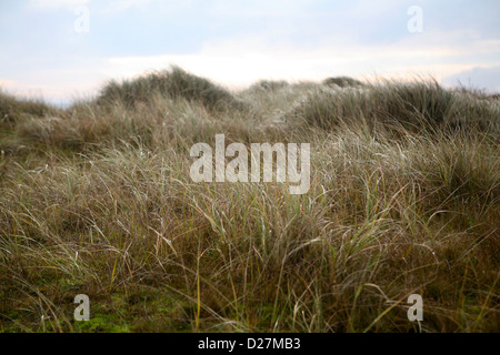 Grass and sedge covered sand dune at Sea Palling, Norfolk, in wintry light
