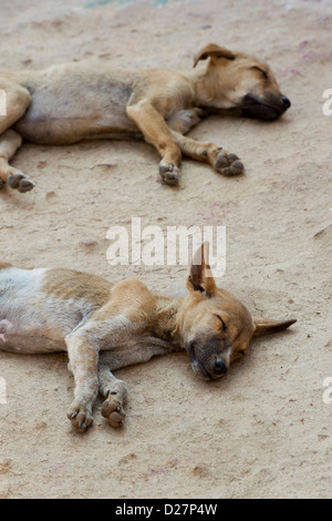 Two very thin undernourished puppies sleeping on the floor in a rural indian village. India - Stock Photo