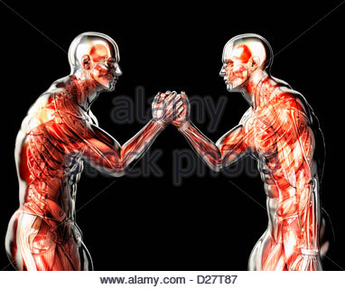 Male anatomical models arm wrestling on black background - Stock Photo