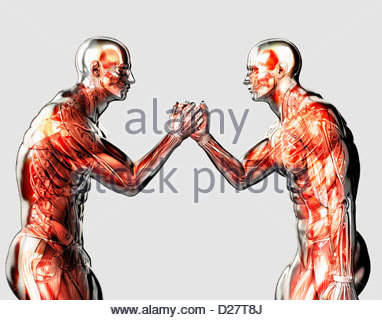 Male anatomical models arm wrestling on white background - Stock Photo