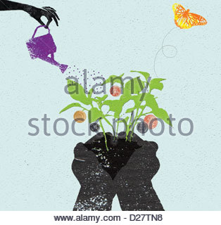 Woman watering money tree seedling in cupped hands - Stock Photo