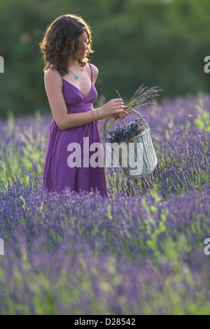 Young woman in lavender field. Vignale Monferrato, Piemonte, Italy. - Stock Photo