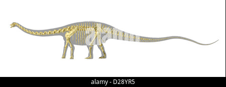 Diplodocus dinosaur silhouette, with full photo-realistic skeleton. On white background with clipping path. - Stock Photo