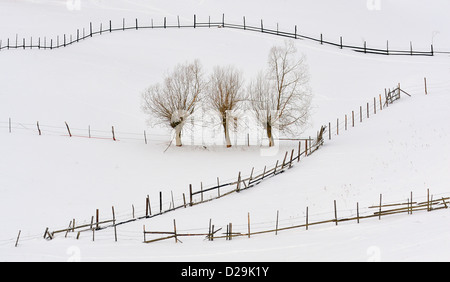 trees in winter time and fences - Stock Photo