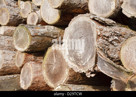 Close up of chopped wood logs stacked in a pile - Stock Photo